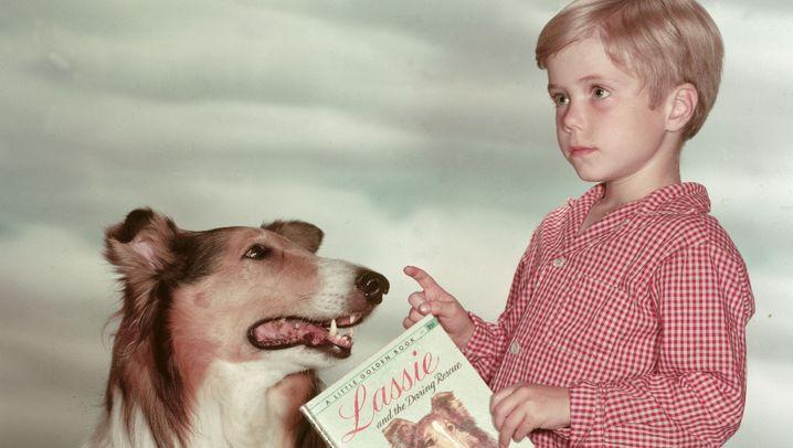 Lassie und Co.: Fellige Filmstars