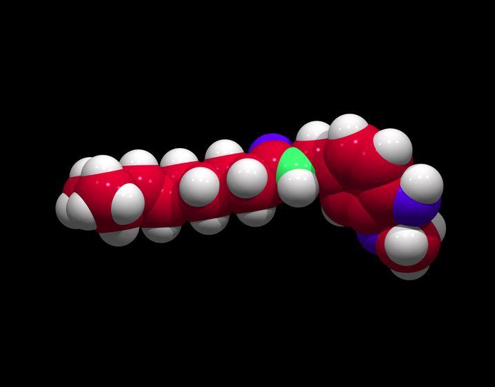 Computermodel von Capsaicin: Passt perfekt auf den Hitze- und Schärferezeptor