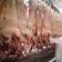 Regierung fehlt der Überblick zu Infektionen in Schlachthöfen