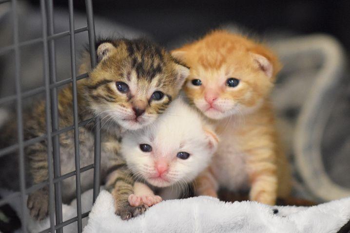 Ein Mitarbeiter entdeckte die drei Katzenbabys