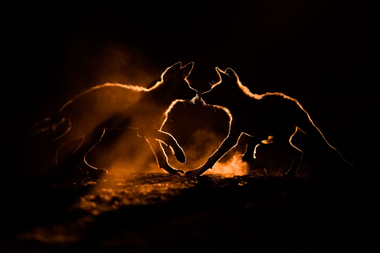 Nature TTL Photographer of the Year 2021 / Animal Behaviour