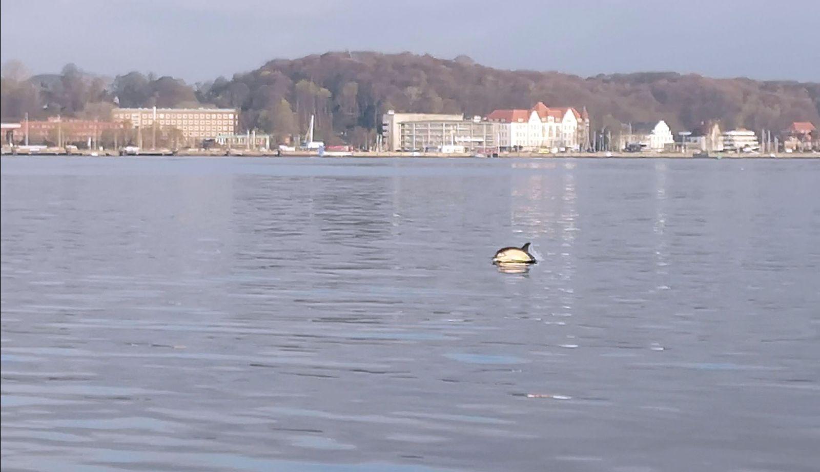 EINMALIGE VERWENDUNG Delfin / Kiel