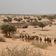 Soldaten töten rund tausend Kämpfer von Boko Haram