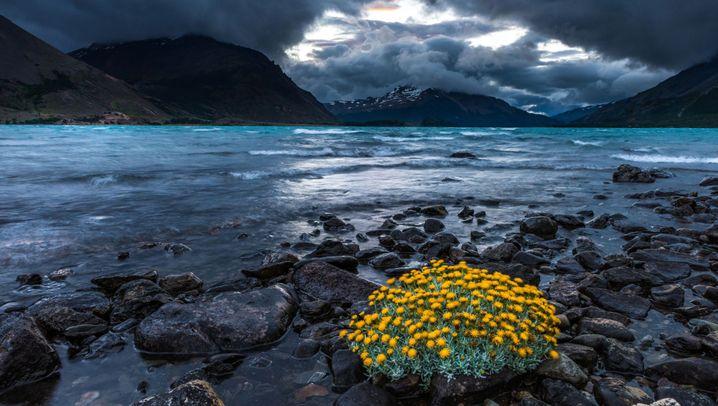 Patagonien: Pinguinkolonien und die letzten Gauchos
