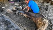 Forscher finden riesigen Dino-Knochen in Frankreich