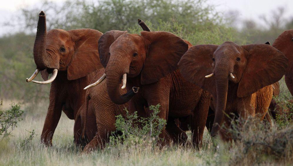 Trumps Elefantenerlass: Erfolg der Jäger- und Waffenlobby