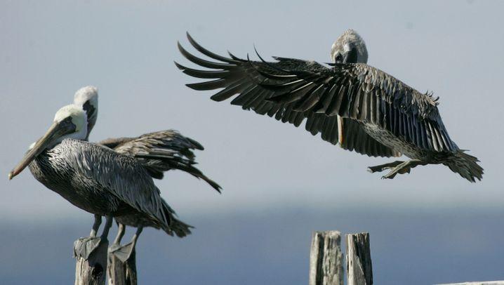 Drohende Ölpest: Tierparadies in Gefahr