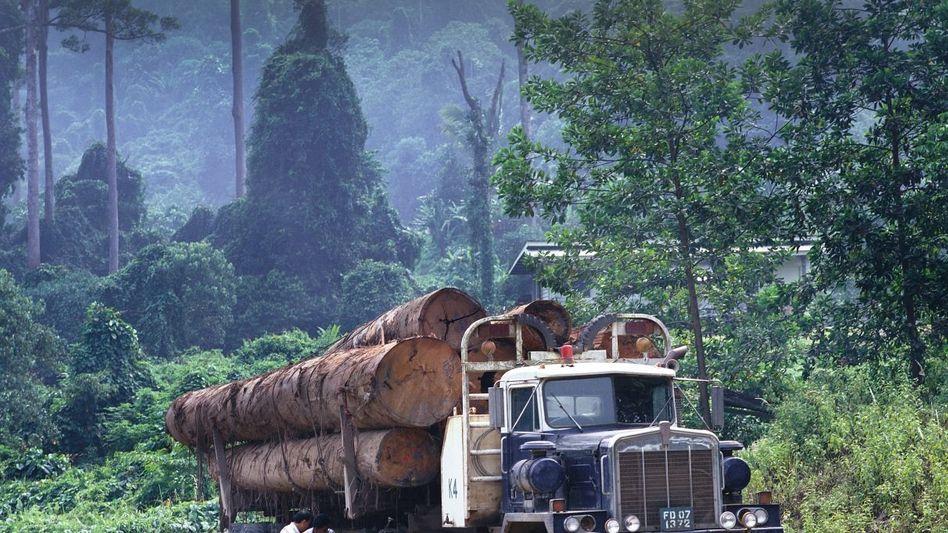 Abtransport von Tropenholz in Malaysia