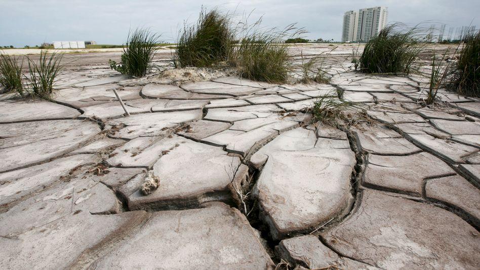 Ausgetrockneter Mangrovensumpf (in Cancún, Mexiko): riesige Kohlenstoffspeicher