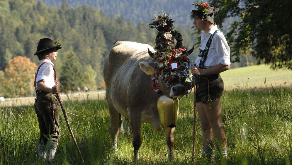 Almabtrieb in den Alpen: Wenn die Kühe Krönchen tragen