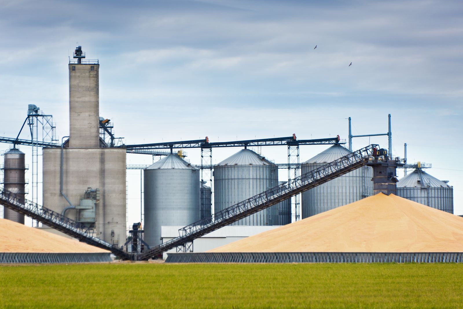 Corn Harvest and Processing Silos in Autumn