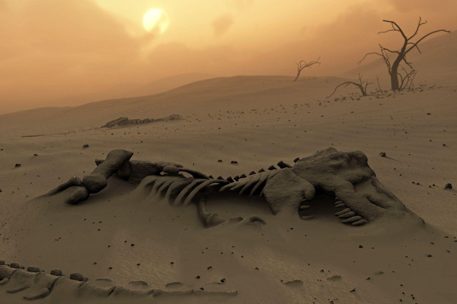 NICHT MEHR VERWENDEN! - SYMBOLBILD Apokalypse / Dürre / Massensterben
