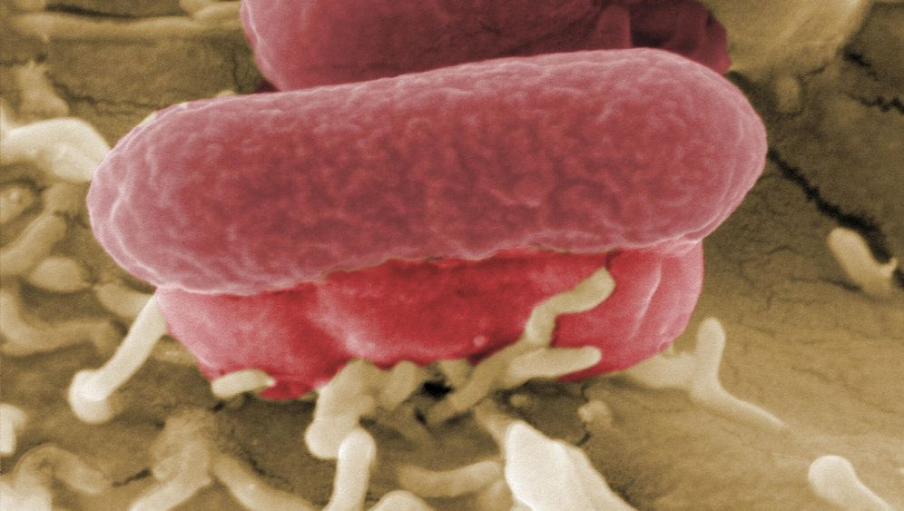 Photo Gallery: Germany Still Hunting the Source of Deadly E.Coli Strain
