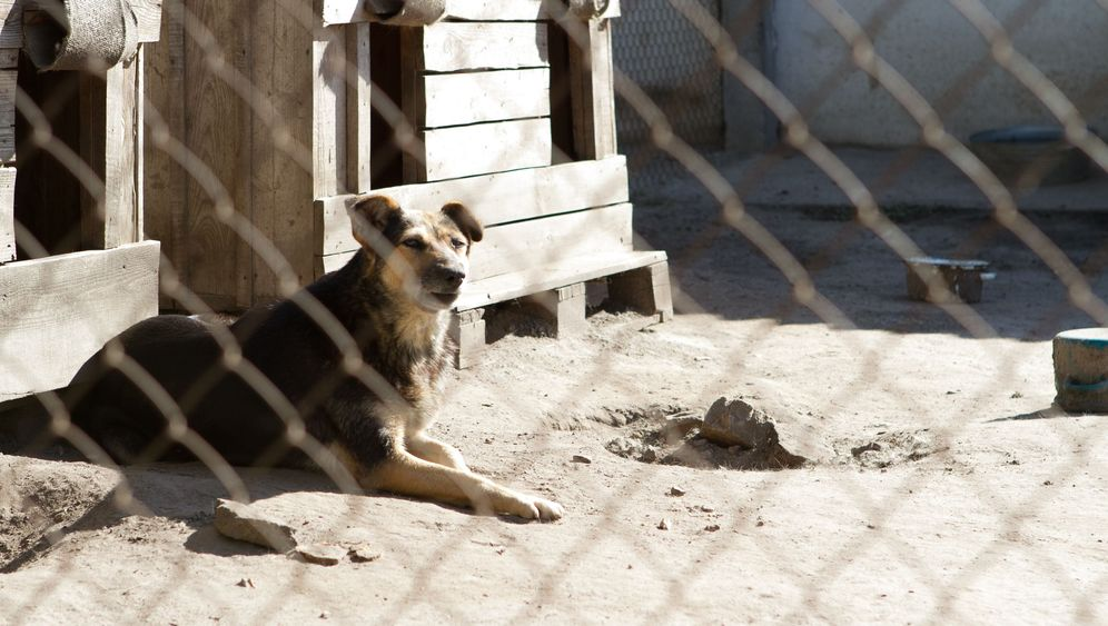 Tierschutz in der Ukraine: Auf den Straßen von Kiew und Charkow