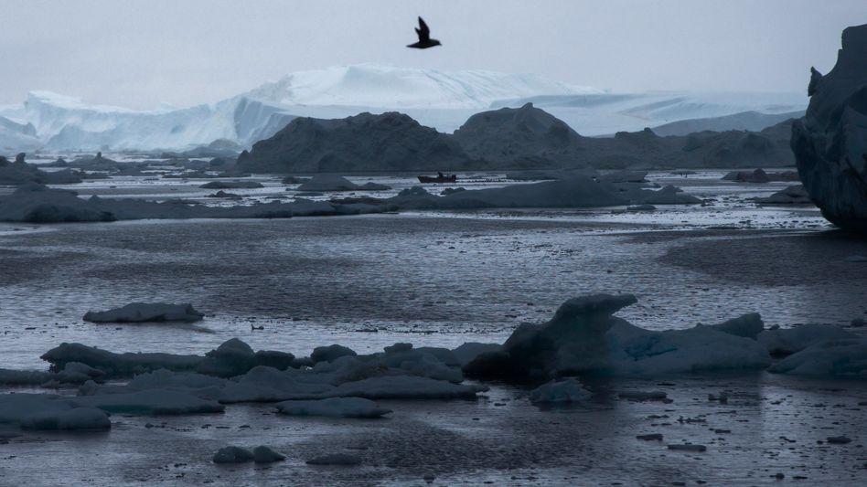Boot vor Grönlands Küste (Juni 2016)