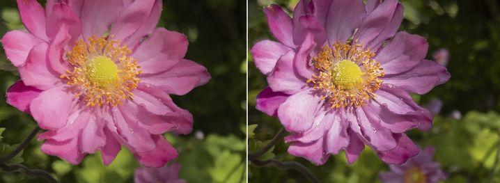 Bei dieser Aufnahme mit dem iPhone 7 Plus fällt der Qualitätsunterschied zwischen der JPEG-Umsetzung (links) und dem Raw-Format (rechts) besonders deutlich auf