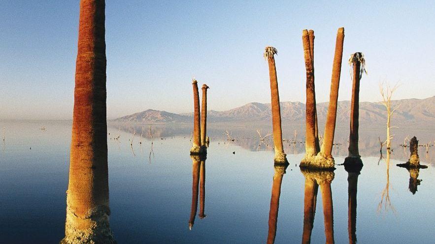 Giftgewässer Salton Sea: Nostalgischer Charme des Niedergangs