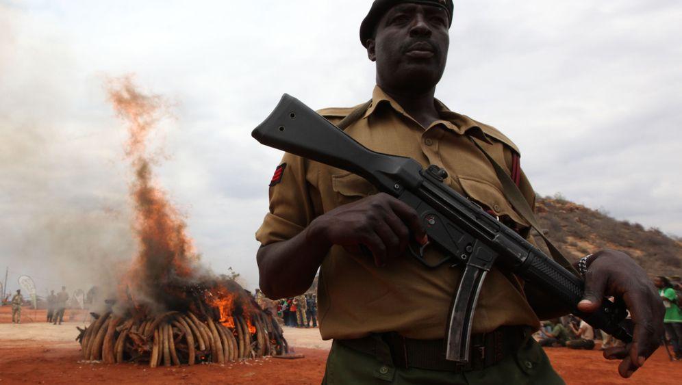 Jagd auf Stoßzähne: Wie Afrikas Rebellen sich bereichern