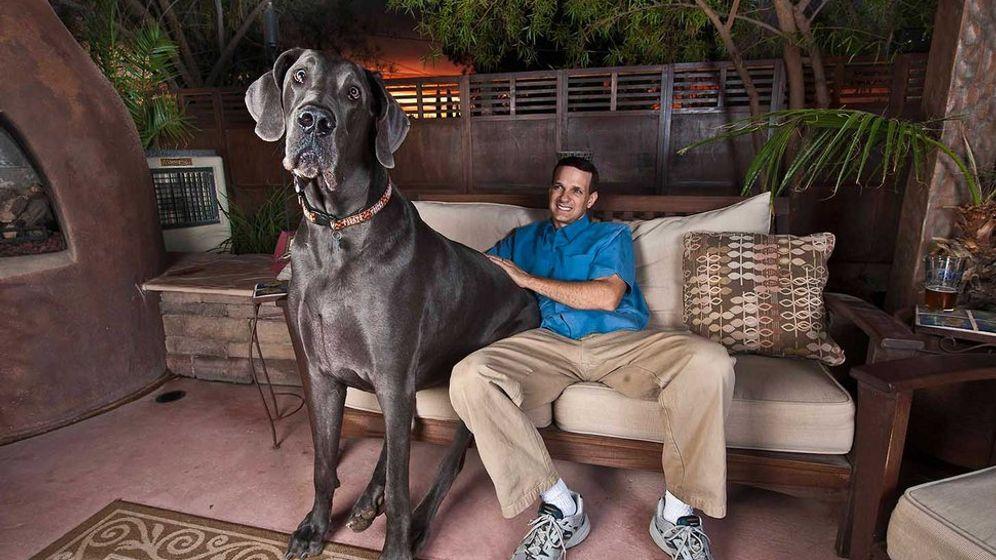 Giant George: Ein Riese der Tierwelt