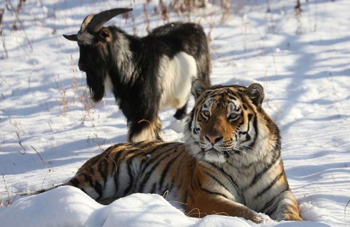 Verblüffende Tierfreundschaft: In freier Wildbahn nahezu undenkbar