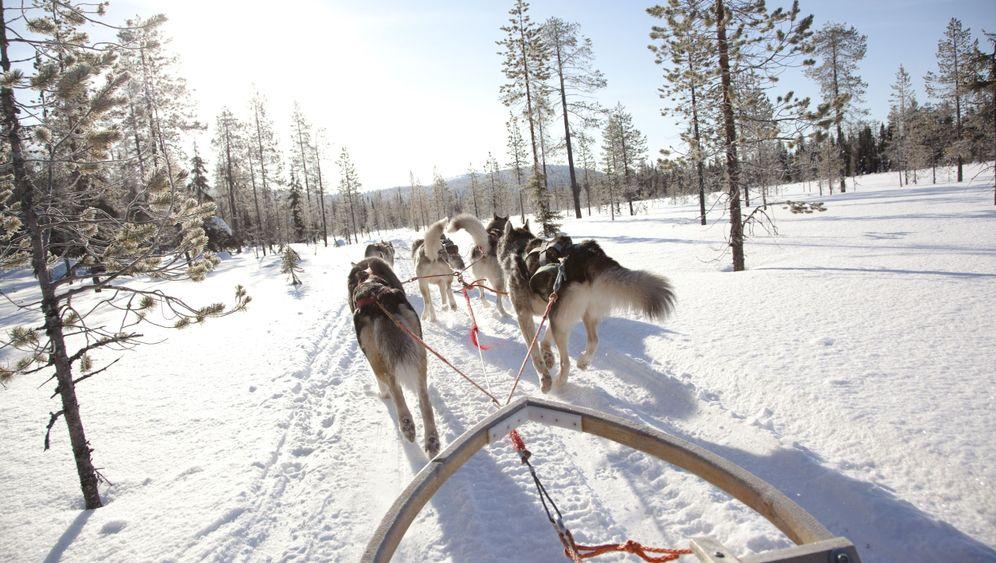Finnland: Mit dem Hundeschlitten durch Lappland