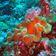 Sie quälen Korallen - damit die fitter werden