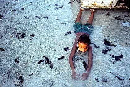 Lagune von Fakaofo: Im Sonnenuntergang spielt ein Mädchen mit Seegurken