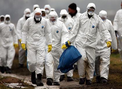 Bundeswehr-Einsatz auf Rügen: Schutzmaßnahmen gegen Ausbreitung der Vogelgrippe