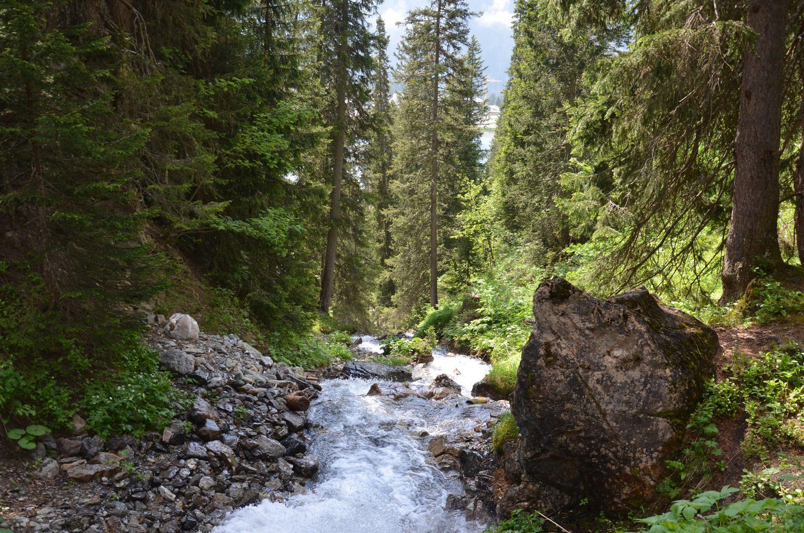 Der Berg ruft - Arosa im Sommer