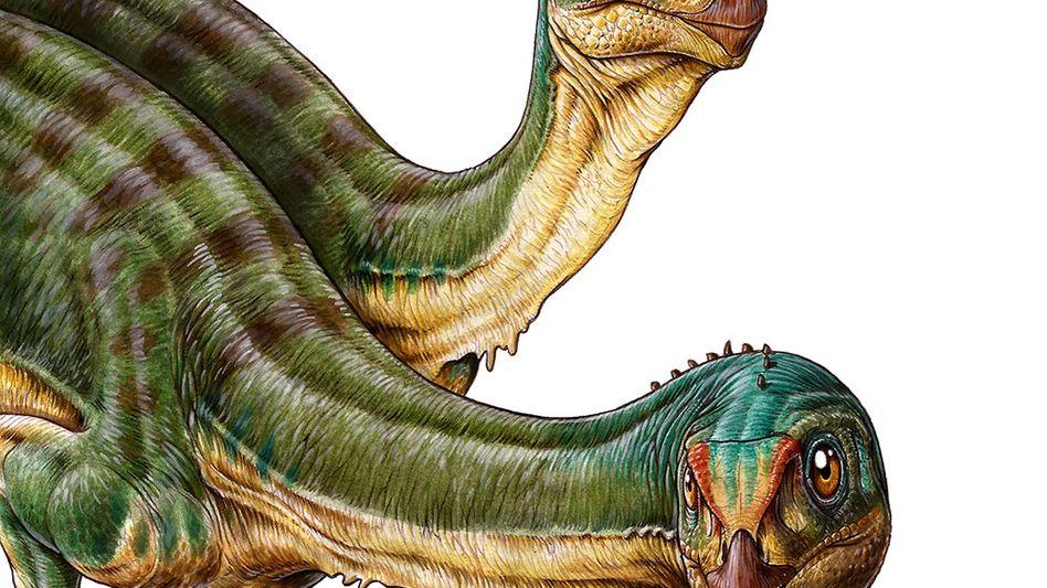 T. Rex-Verwandter: Vegetarier mit seltsamen Füßen