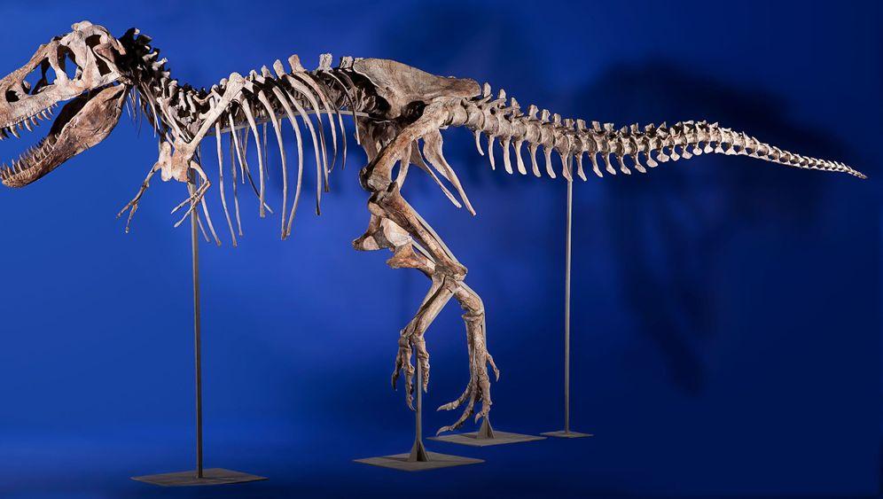 Fossilauktionen: Knochen und Knete