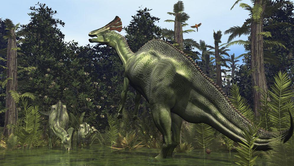 Paläontologie: Der Entenschnabelsaurier von Mexiko