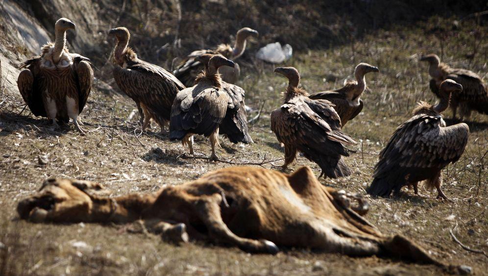 Indien: Wenn's der Geier nicht holt