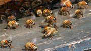 EuGH erlaubt nationales Verbot von Insektengiften