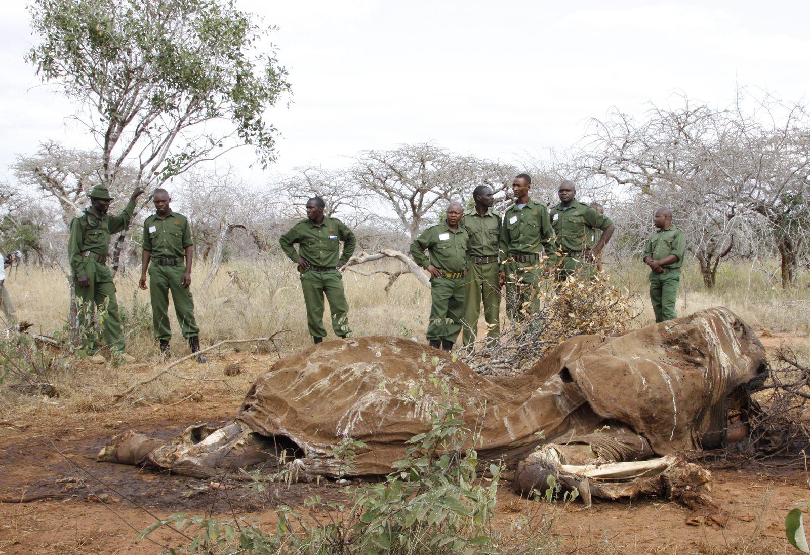 Elefanten-Kadaver / Kenia