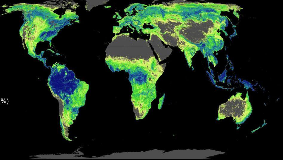 Potenzial der Erde. Auf 4400 Millionen Hektar Land könnte Wald wachsen