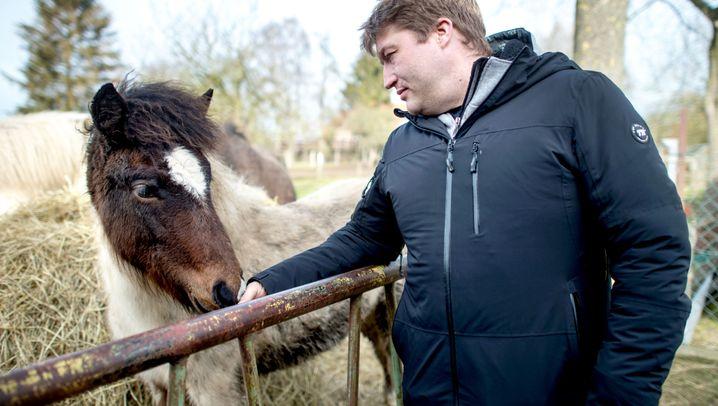 Wolfsangriff in Niedersachsen: Rüde auf der Abschussliste