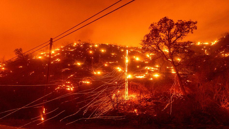 Bäume brennen an einem Hang bei Vacaville im US-Bundesstaat Kalifornien.