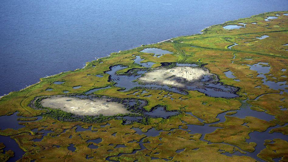 Marschgebiet bei New Orleans im US-Bundessstaat Louisiana: Pegelanstieg trifft Regionen unterschiedlich