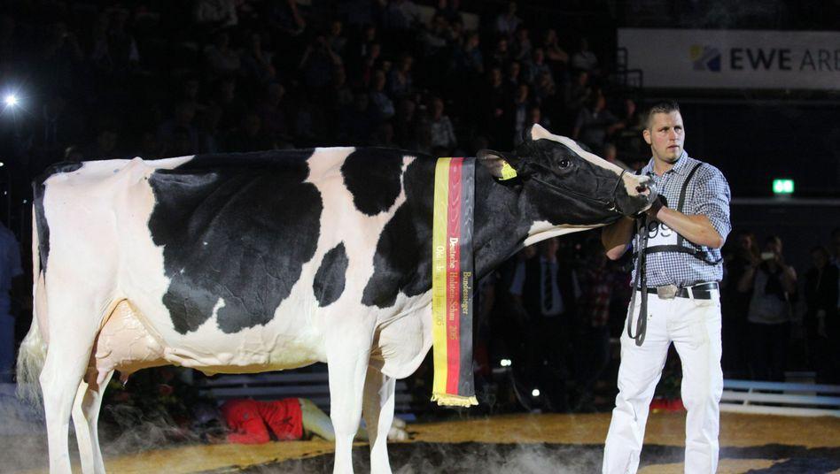 Landwirt Henrik Wille und seine Kuh Lady Gaga: Gewinner bei der Deutschen Holstein-Schau in Oldenburg