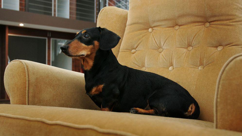 Rente mit 67 Hundejahren: Ruhestand bei Tieren