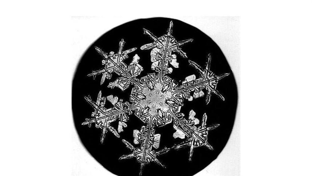 Der Schneeflockensammler: Eisige Schönheiten