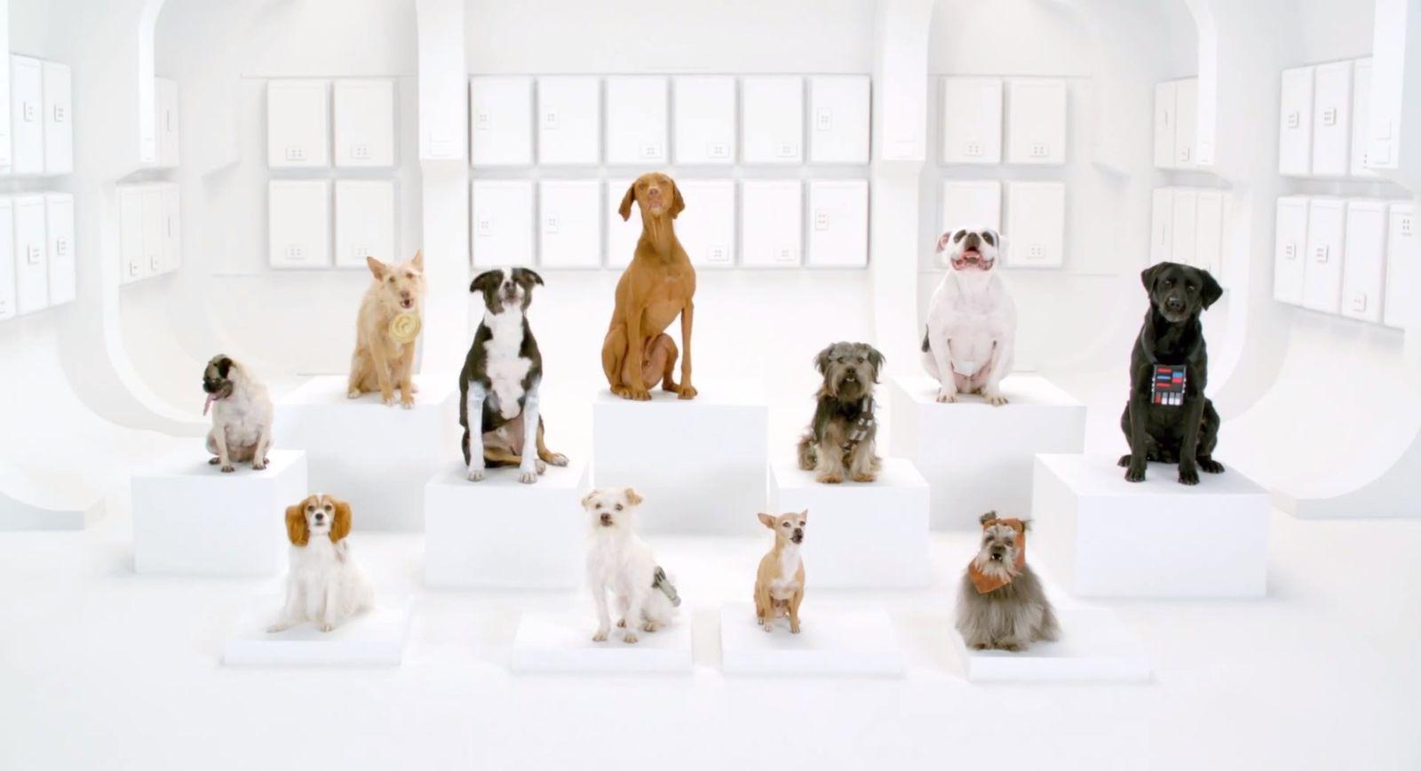 NUR ALS ZITAT Screenshot Youtube VW-Werbespot / Hunde