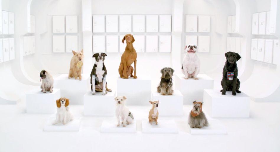Screenshot Youtube VW-Werbespot / Hunde