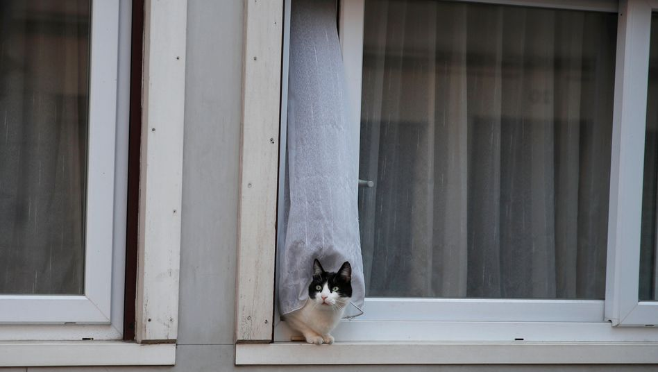 Katzen können sich offenbar ebenfalls mit dem Coronavirus infizieren