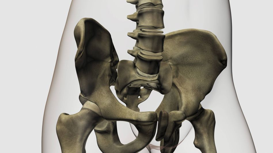 Beckenknochen des Menschen