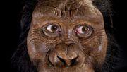 Forscher rekonstruieren Gesicht des ältesten Vormenschen