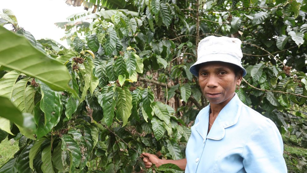 Vanille: Der Rohstoff, der die Welt verfeinert