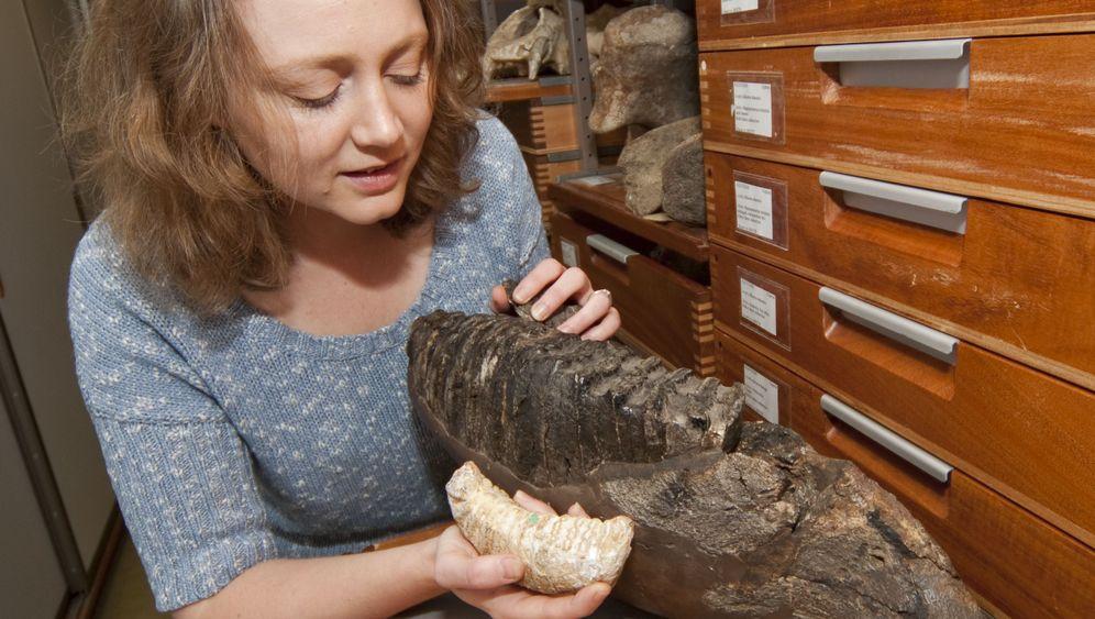 Fossilfunde: Die Mini-Mammuts von Kreta