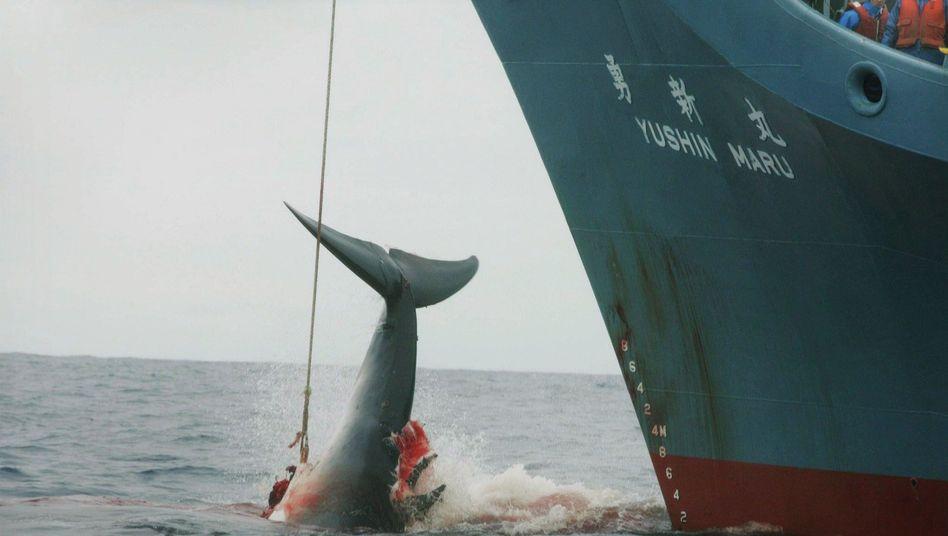 Japanisches Walfangschiff (Archivbild)